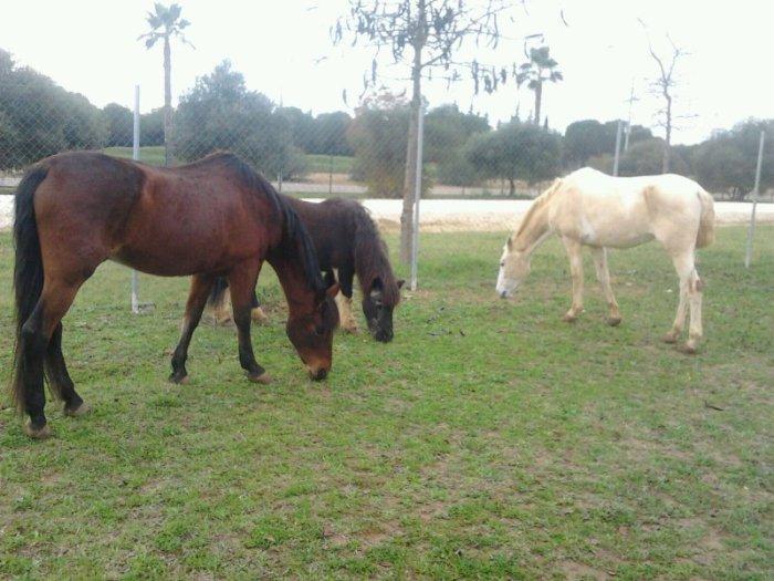 20160108-caballos pastandor